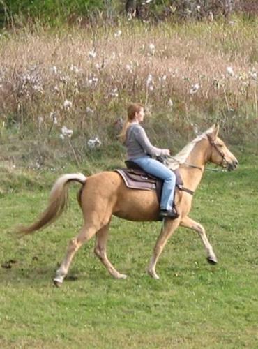 10% OFF! SUPER SALE UNTIL FEB 5!! BEGINNER SAFE TRAIL HORSES!!