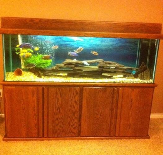 120 gallon fish tank (aquarium) complete