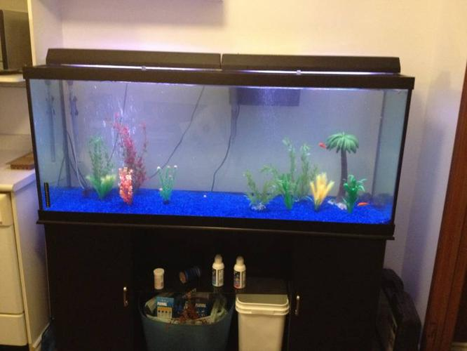 120 gallon fish tank with stand and 7 Piranhas for sale in Thunder