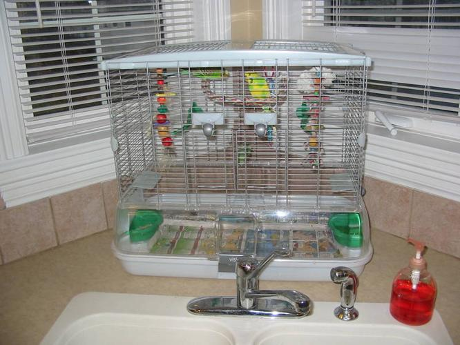 2 BUDGIES WITH CAGE AND ACCESSOTIES