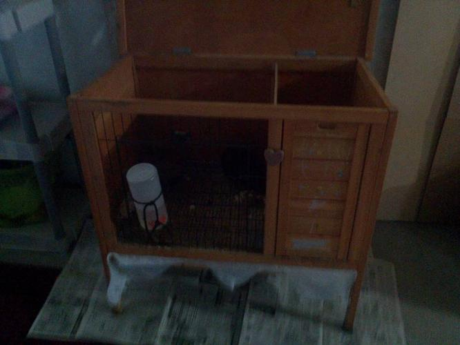 2 yr old Guinea Pig and Wood Cage
