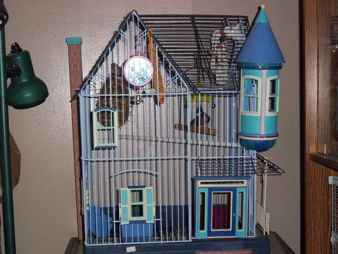Pin Zebra-finches-with-flight-cage on Pinterest