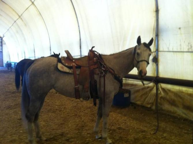 2007 APHA Gray Mare