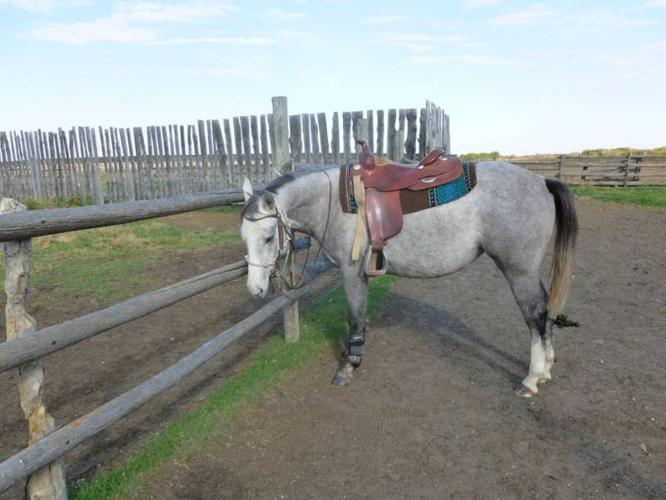 2009 grey AQHA filly Playin In Command