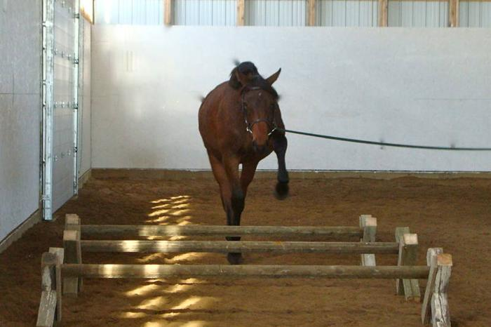 2010 TB X Filly Sport Horse