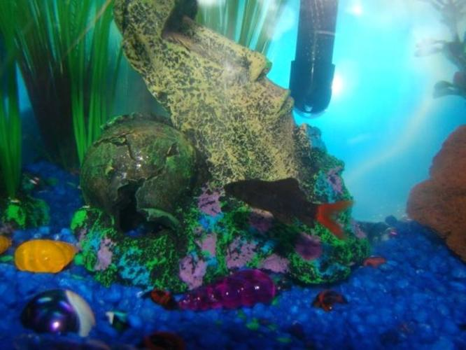 30 gallon fish tank with accessories and fish