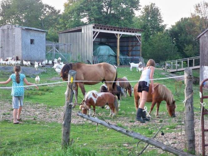 4 MINIATURE HORSES