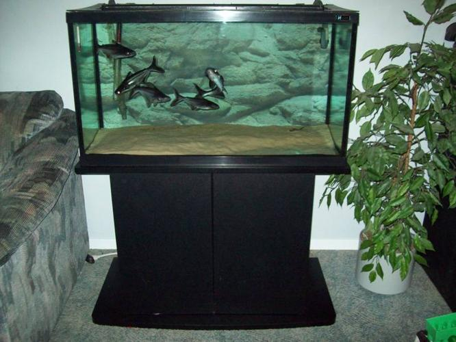 55 Gallon Tank with Stand and Accessories and Sharks