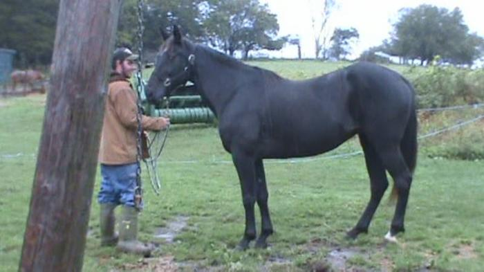 9 year old mare for sale