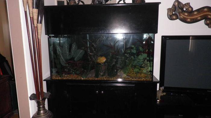 90 Gal Fish Tank