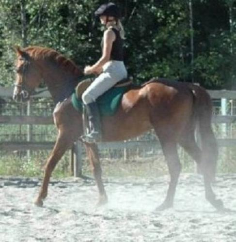 Amateur Sport Horse, Hunter/Jumper/Dressage or Pony Club