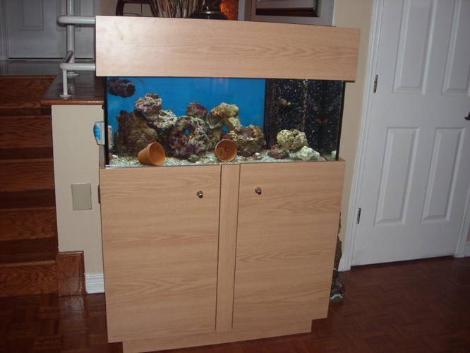 aquarium d'eau salee toute equipee avec vivant