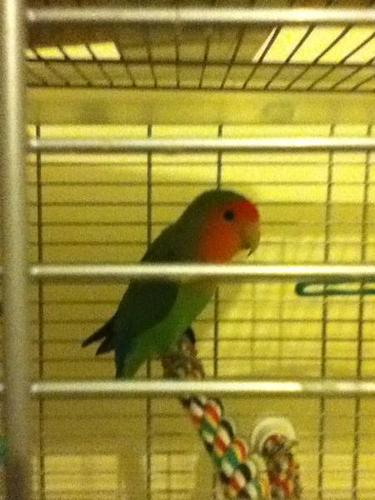 (ASAP) Love Bird