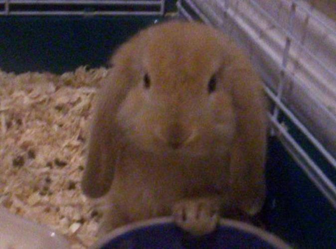 Baby bunnies - lops too