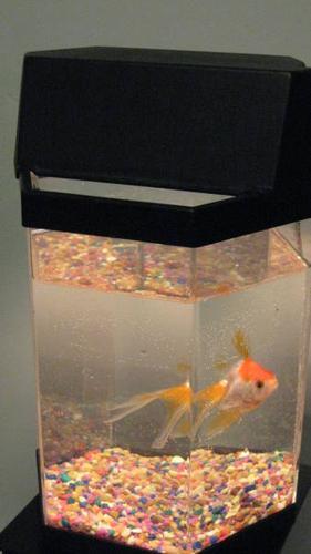 BLACK OCTAGON FISH TANK Starter kit