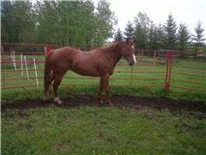 broke double registered mare