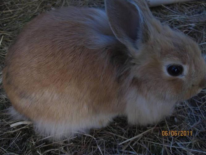 Bunny to give away!!!!!!!!!!!!!!!!!!!!!!!!!!!!!