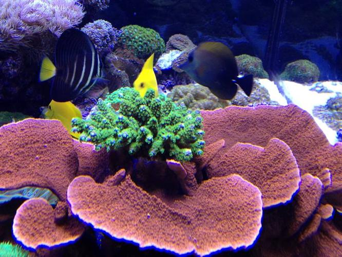 complete 250 gallon reef part out