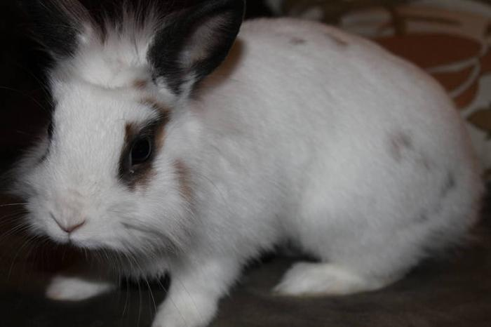 CUTE LITTLE BUNNY JUST IN TIME FOR THE HOLIDAYS :)