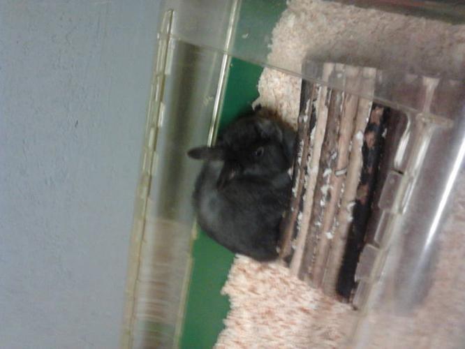 Cute rabbit for sale!!