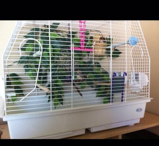 Finches, cages & accessories - make an offer