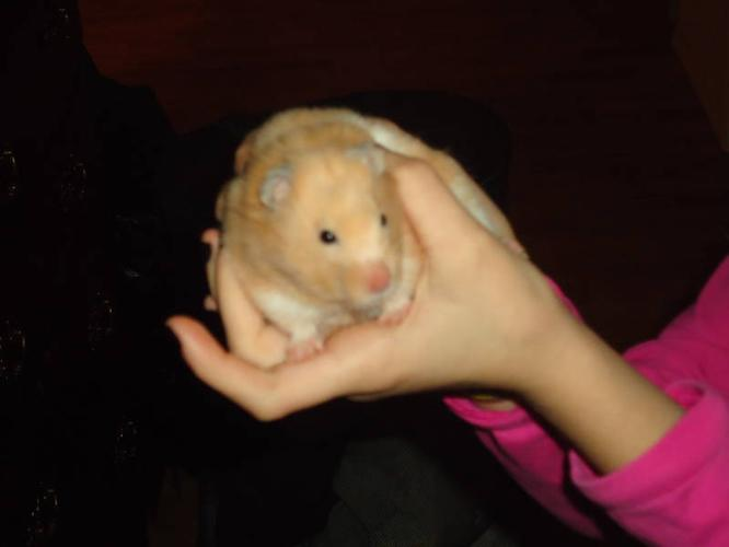 FIND THIS HAMSTER A HOME :)