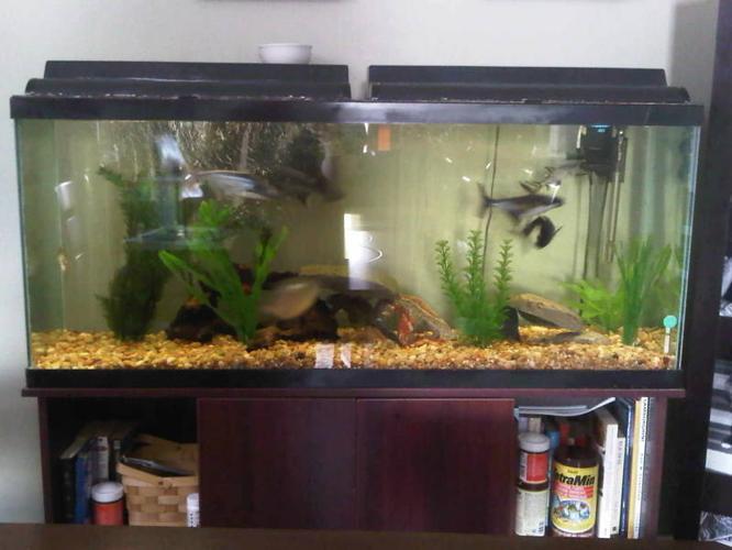 gallon fish tank value - 55 Gallon Fish Tank Prices 2017 - Fish Tank ...