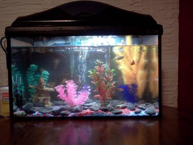 Fish for sale! +tank and everything you need. $100 OBO
