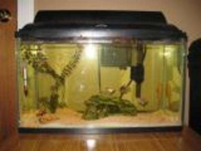 Fish Tank Set : Fish tank - complete set up for sale in Nanaimo, British Columbia ...