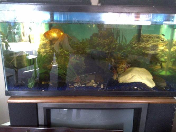 fish tank with fish aquirum for sale. or for trade needs to go!