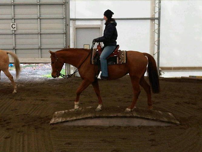 Flashy WB mare
