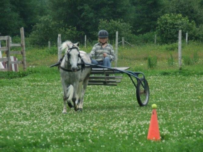 For Lease: BoomProof 9 year old 13-13.1hh Pony