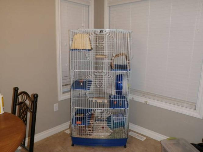 For Sale Two Chinchilla's with Cage and all Accessories