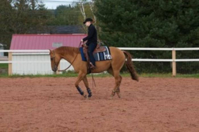 For Sale/Trade: 2003 Red Dun Reg. QH Mare