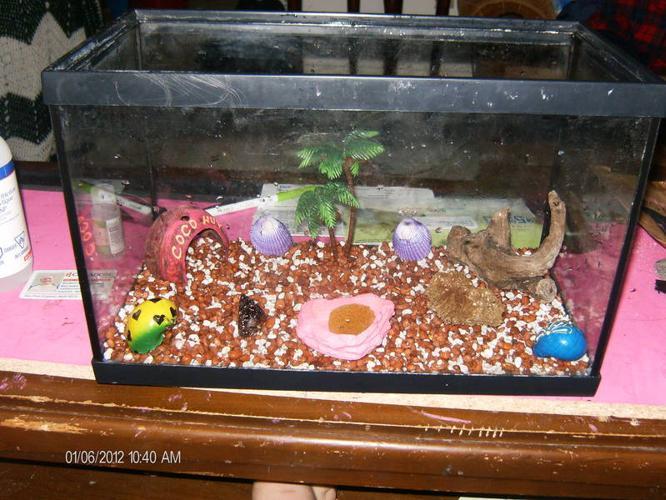 hermit crab set up