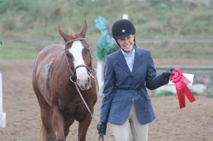 Hunter/Jumper Large Pony for SALE