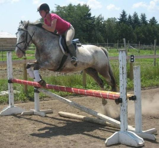 Jumper/eventer available for in barn lease