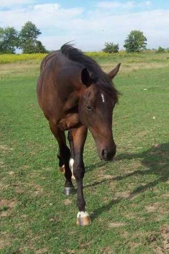 light riding/companion horse available to approved home