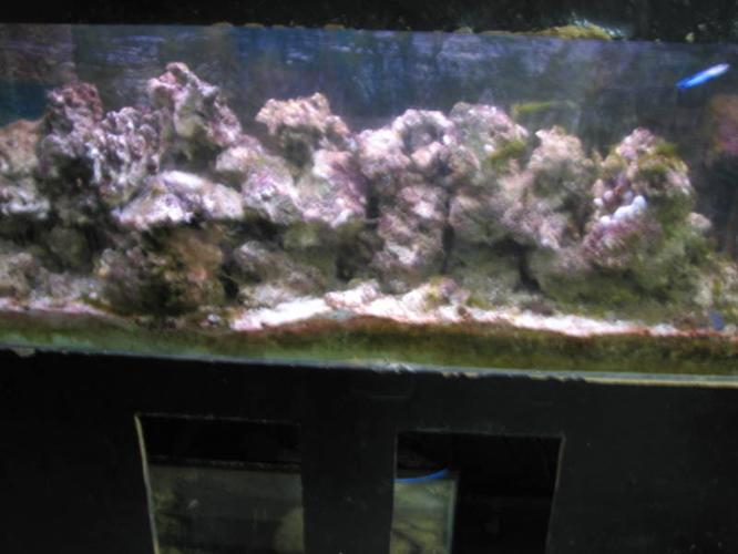 Live Rock approx 200Lbs has been in the tank over 5 years