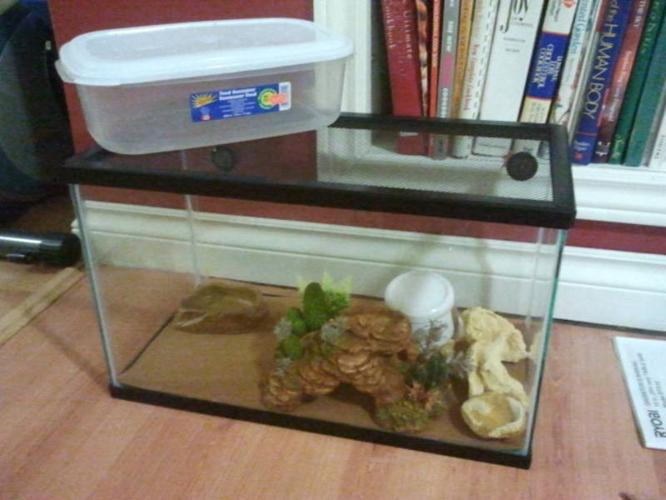 Lizards tank and all the accessories!
