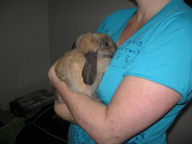 Loppy Eared Rabbit & Cage