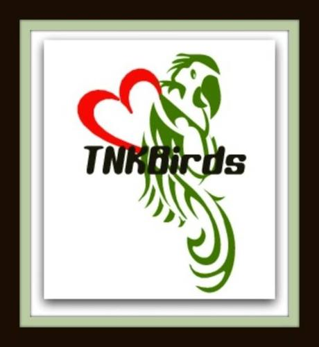 LOVE BIRDS/TURQUOISINE PARAKEETS/ENGLISH BUDGIES-BRAND NEW CAGES