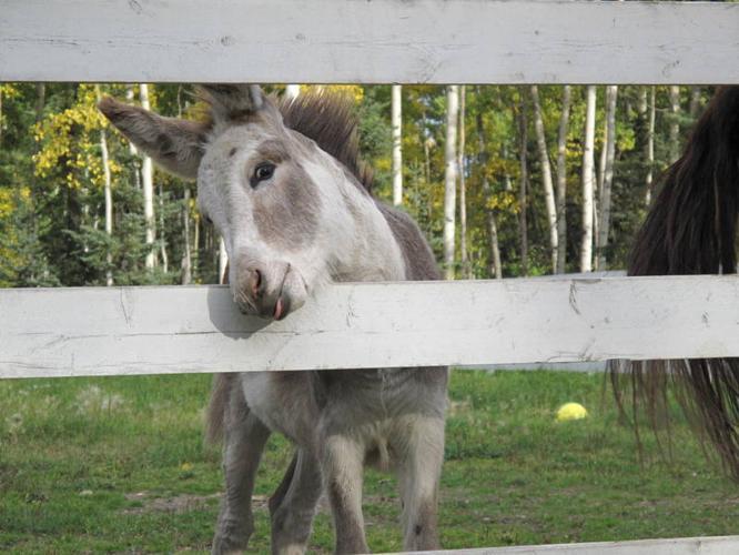 Need to transfer my donkey