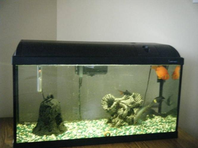 NEW LOWER PRICE*Fish Tank includ 5 Mature Fish & All Accessories