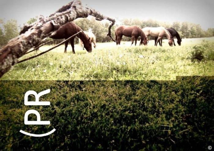 PR Ranch - Sale Horses, Training, Lessons, Tack and MORE!