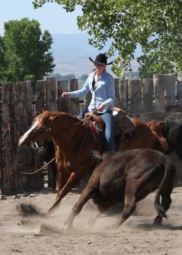 Professional Horse Training - Spots Available!