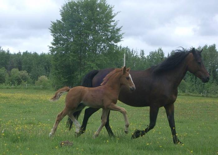 Quality, talented Canadian Weanlings for sale
