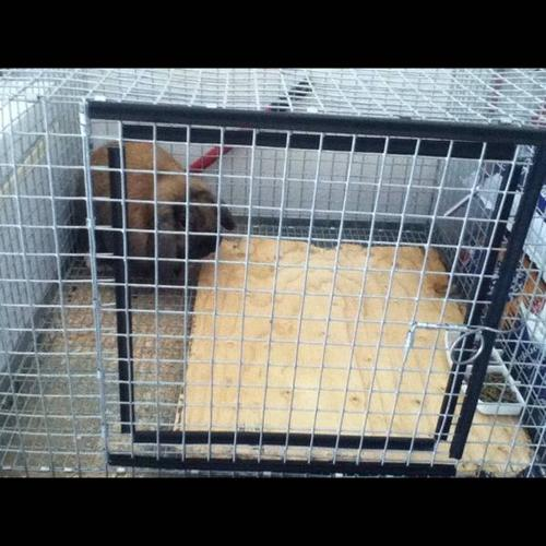 Rabbit sold only cage and accessories