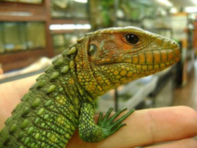 Rare Animals at Port Credit Pets - Canada's Reptile Central