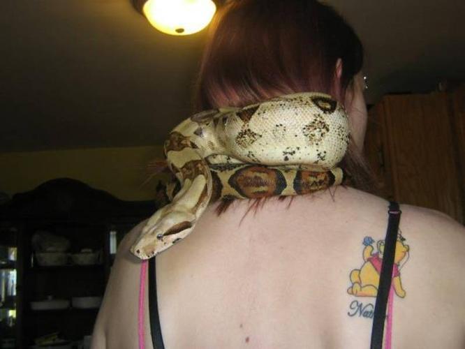 Rare Find - Columbian Morph Snake